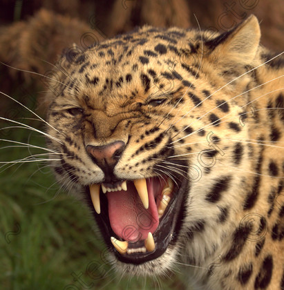WC0009 