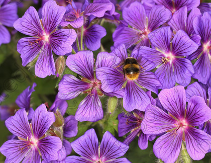 FL03866 