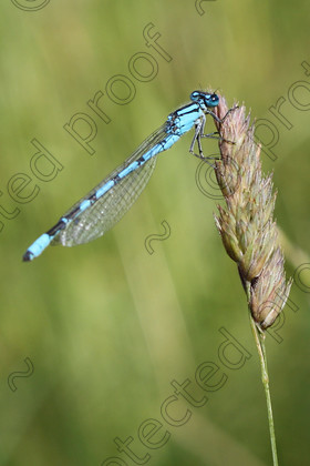 MN001061 