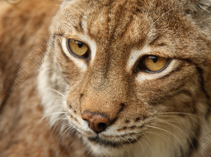 Wildcats0008 