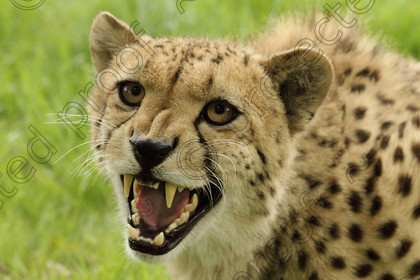 Wildcats0004 
