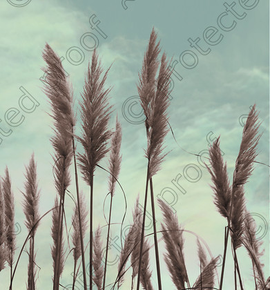 FL002341 