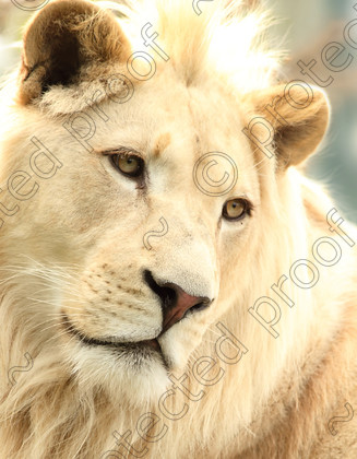 WC002543 