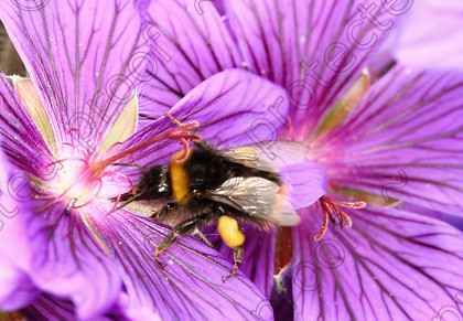 FL03853 