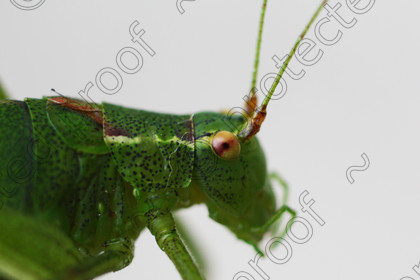 MN09294 