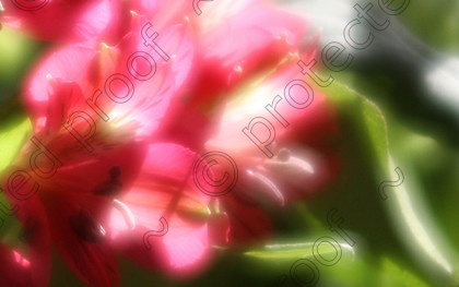 MN09882 1 