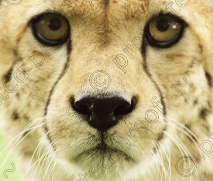 WC00252 