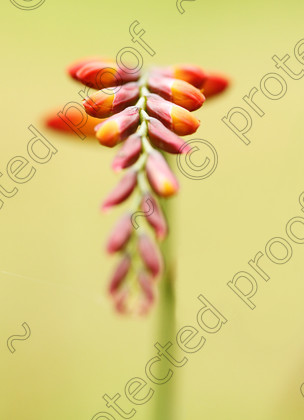 FL000351 