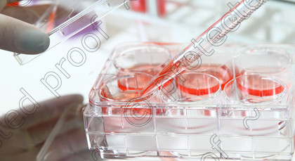 CellCulture016 