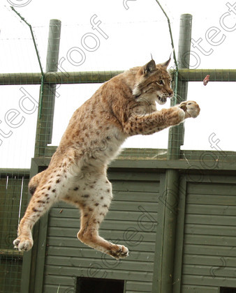 WC002541 